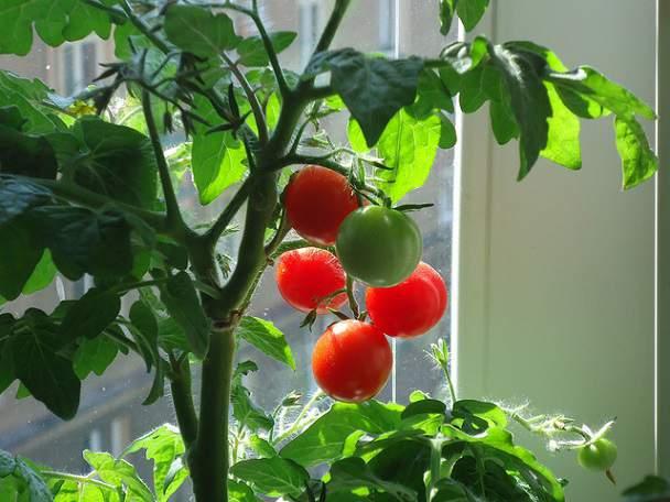 progres rosia montana