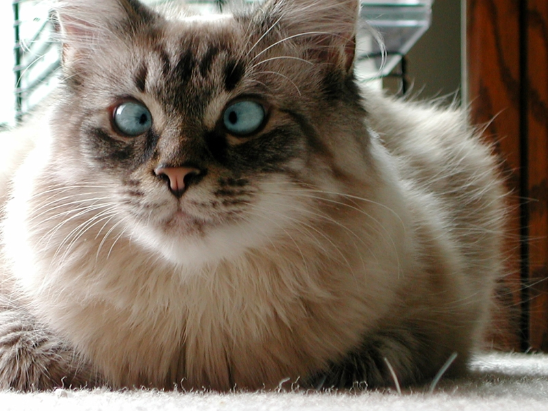 cea mai frumoasa pisica 2