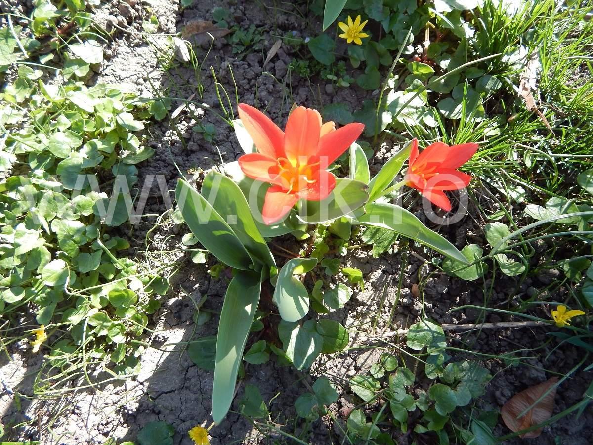 flori parcul cismigiu