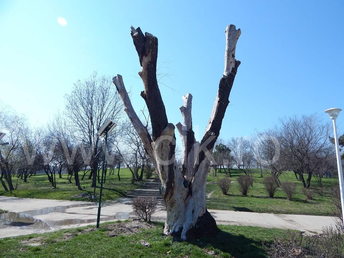 copac parcul tineretului
