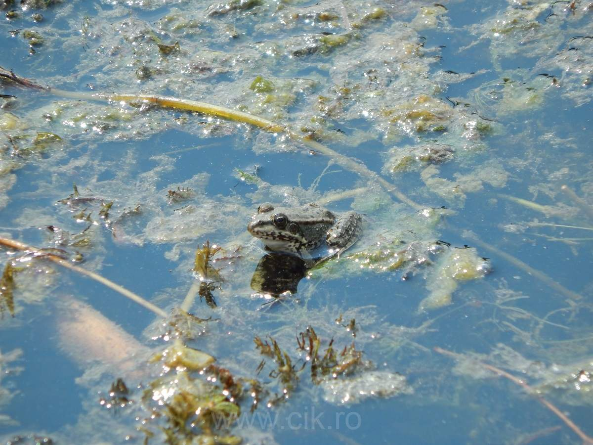 Delta Bucuresti Lacul Vacaresti