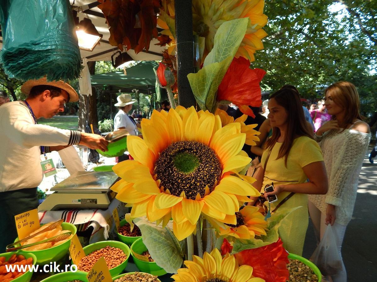 floarea soarelui zilele bucurestiului parcul cismigiu