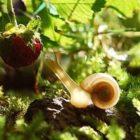 Snail Study Dorms
