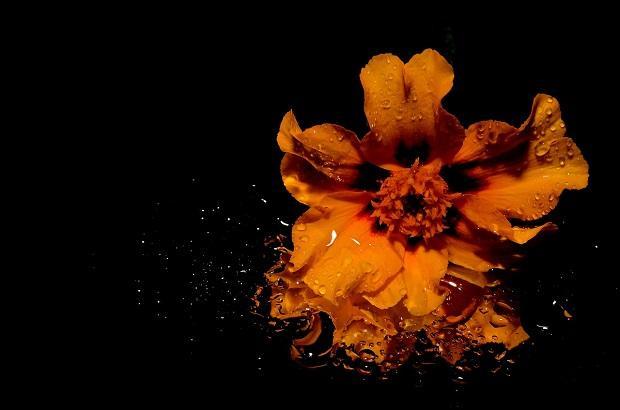 Flower-of-the-Queen