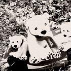 ursuleti polari coca cola salbaticie