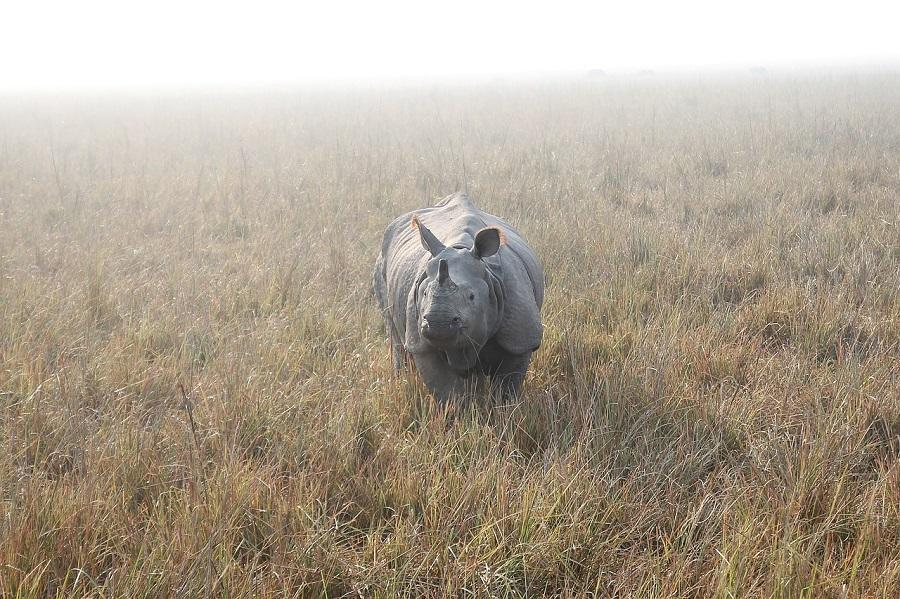 Atitudinea de rinocer uman