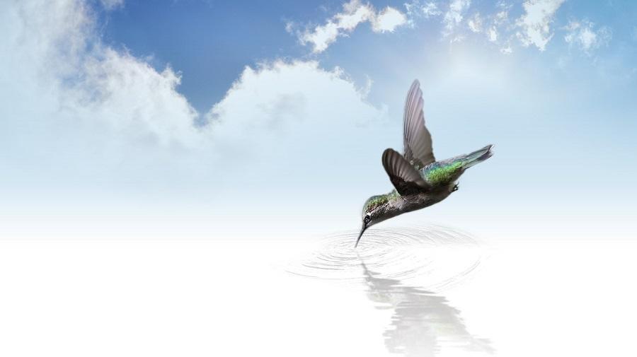 Viata unui om, precum o aripa purtata de vant