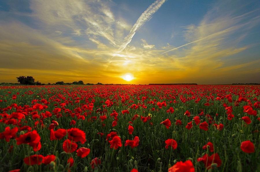 De ce oamenii iubesc atat de mult soarele si zilele senine