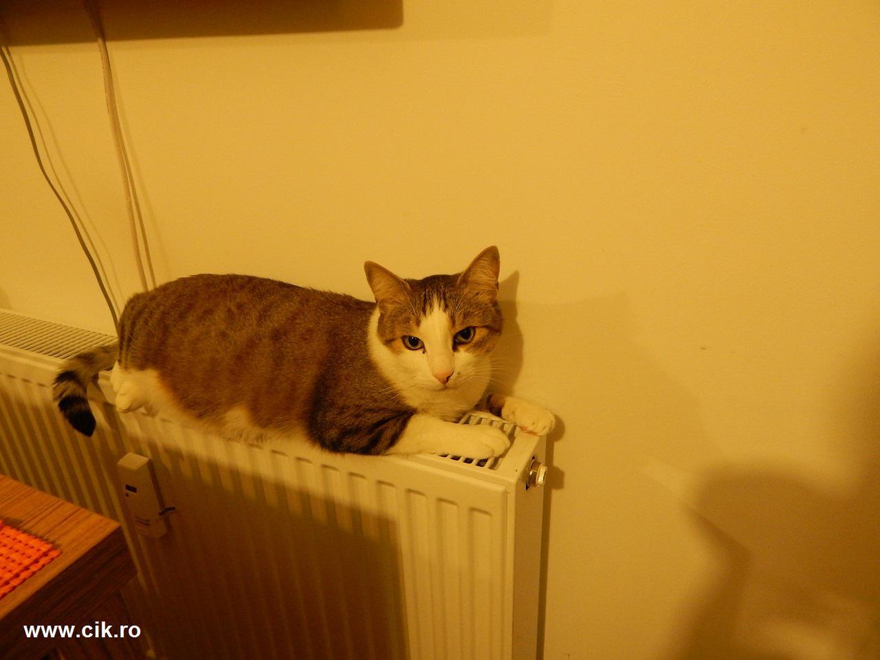 mishu pisica vede ca nu este vreun pericol